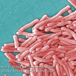 Legionella pneumophila-bacteria ce provoacă boala