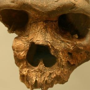 Homo heidelbergensis ging aus Homo erectus hervor.