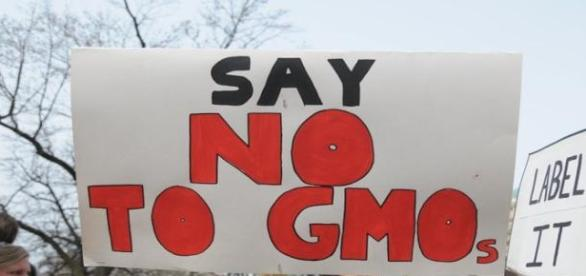 GMO foods not fully accepted by the public.
