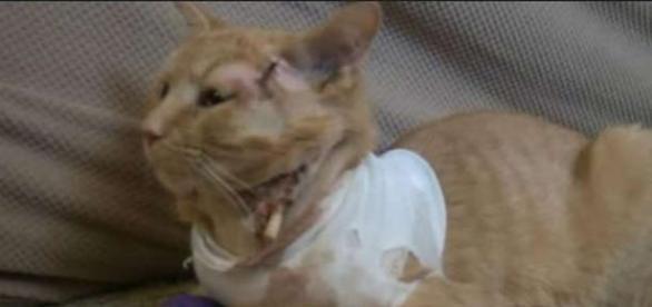 Opie a suferit răni grave dar se va recupera