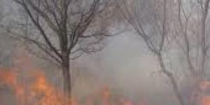 Pădure arsă, pomi ocoliți de foc!
