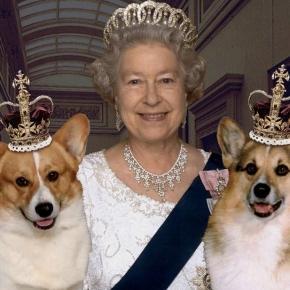 Elisabeta a II-a îndrăgostită de căței corgi