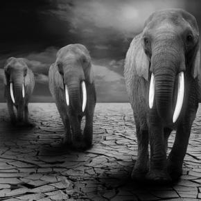 African elephants. Image courtesy of Pixabay