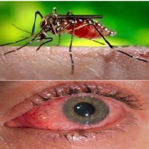 el virus de zika, nueva amenaza para la humanidad