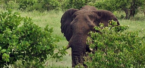 Elephant in Zimbabwe. Image by J. Flowers