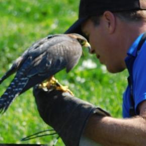 Owner of Adam's Falconry Service, Adam Chavez / Photo via Odette Perez