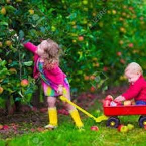 Kinder in einem Obstgarten zum Selberpflücken. Was für ein Erlebnis!