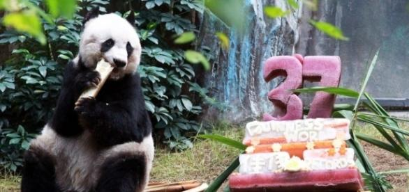 Hong Kong giant panda Jia Jia breaks world record to become oldest ... - scmp.com