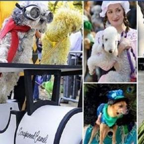Dog Parade a New York per festeggiare Halloween