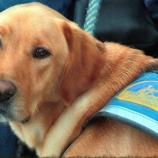 Legal service dogs are specially trained by https://www.flickr.com/photos/bitsorf