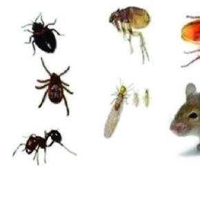 Receitas caseiras para se livrar de pequenos insetos