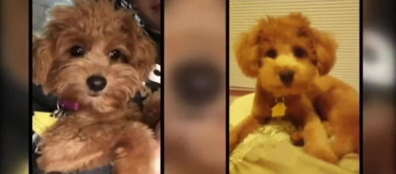 Craigslist N Ms >> Craigslist sells dogs of woman in hospital