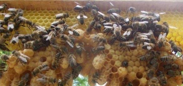 Apiculture : 70% des abeilles ont disparu. 15000 apiculteurs en moins depuis 10 ans