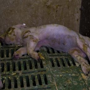 Tierquälerei in deutschen Stellen ? Laut den CDU Abgeordneten, gibt es das kaum noch.