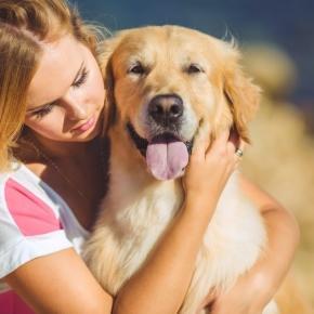 Aprenda a tratar o medo excessivo nos cães
