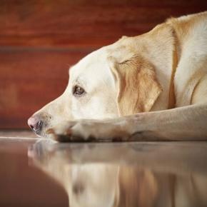 Cachorros sofrem muito coma perda de seus donos