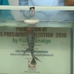 Chennai Fish making the prediction http://www.financialexpress.com/world-news/us-elections-2016