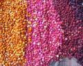 Quinoa, un alimento revolucionario