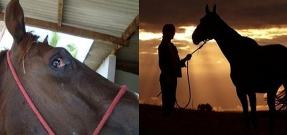 Como identificar tétano em seu cavalo