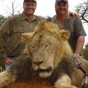 Minnesota dentist who killed Cecil the lion gets mauled on the ... - pri.org