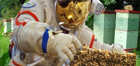 Les apiculteurs Français devront-ils ressembler à des extra terrestres, demain, pour se protéger des insecticides qui submergent la nature Française ?