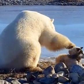 Polar Bear pets a dog in rare encounter caught on video: Photo: Blasting News Library - rover.com