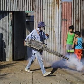 WHO declares global emergency over Zika virus spread - StarTribune.com - startribune.com