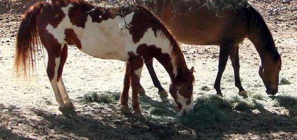 A new method of implant can help horses with TN by https://www.flickr.com/photos/ekilby/;