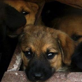 Cani randagi a Roseto degli Abruzzi