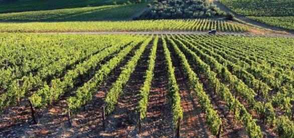 Esonero contributi per nuove anziende agricole nella Legge di Bilancio