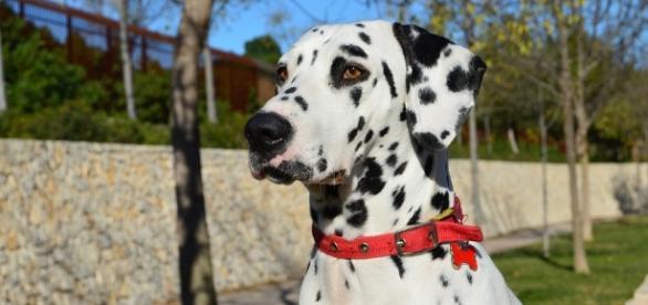 7 raças de cães que dão trabalho na hora de aprender onde fazer as necessidades