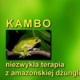 Kambo oczyszczając z grzechu, zabija