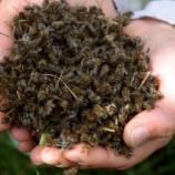 Depeche - Epandage de semences au Gaucho: des apiculteurs ... - france24.com