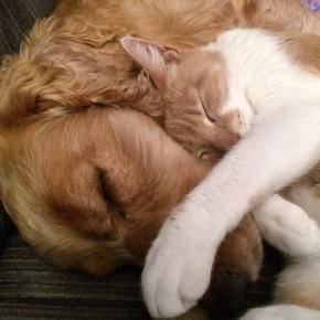 Dose de fofura: amizades improváveis entre animais