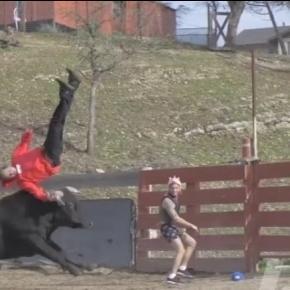 Właśnie tak kończą się próby kozaczenia przed bykiem.