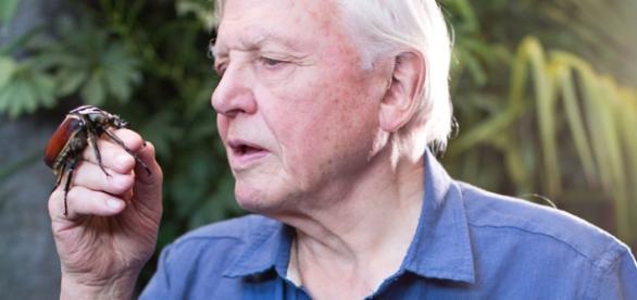 Sir David Attenborough- Back Again