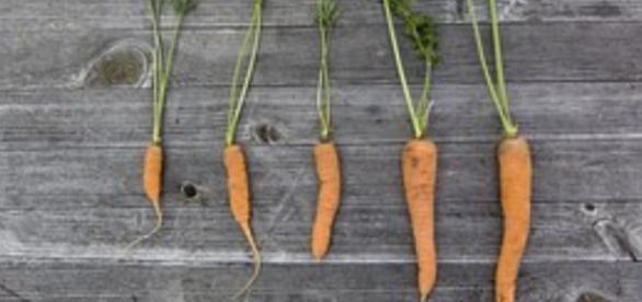 La FAO élabore des plans de sauvegarde de l'agriculture pour lutter notamment contre les excès (surconsommation et sous-alimentation)