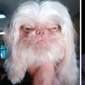 Cachorro é idêntico ao empresário Richard Branson