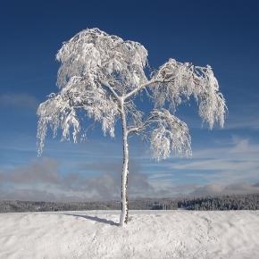 Winter - Free images on Pixabay - pixabay.com