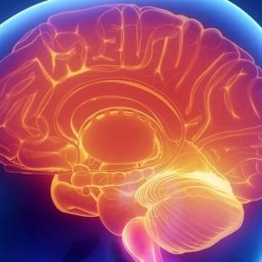 What makes the brain tick so fast?/Photo via University of Oxford - ac.uk
