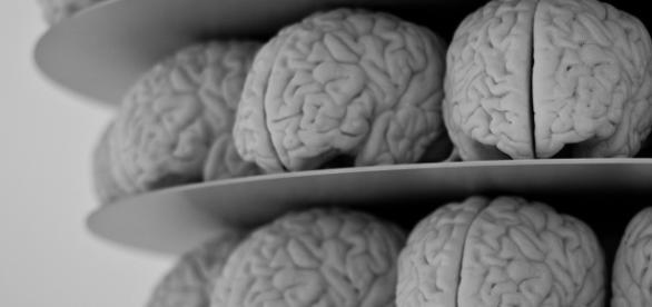 Nel 2016 sono stati compiuti altri importanti passi avanti dai neuroscienziati