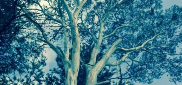 Un árbol, una vida con ramas y hojas.