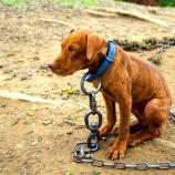 Dogs rescued found on heavy chains - lifewithdogs.tv