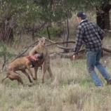 Momentul în care bărbatul sare în ajutorul câinelui său - Foto: captură YouTube