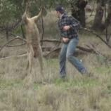 A man in Australia punched a kangaroo in the face in order to save his pet dog - Photo: YouTube.com (ViralHog channel)