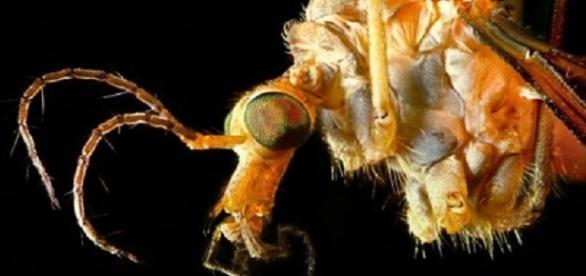 Un insecto convertido en el terror de la humanidad