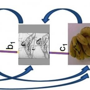 Ensinando o conceito banana de várias formas.