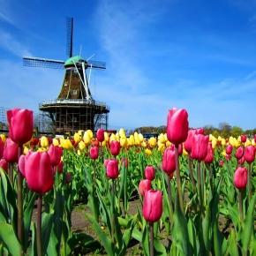 Universitários brasileiros para estudar na Holanda