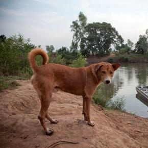 A dog looks on in The Gambia along a river bank - (photo via photostellstories.org)