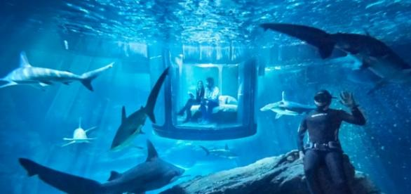 The Shark Aquarium on AirBnB (theverge)